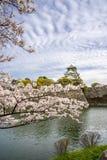 Osaka slottsakura (körsbärsröd blomning) träd Arkivfoto