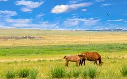Osamotneni konie na łące obrazy royalty free