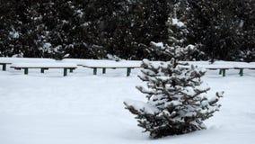 Osamotneni mali świerczyna stojaki w zima parku podczas opad śniegu zdjęcie wideo