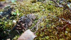 Osamotneni mrówka bieg zbiory