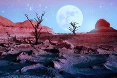 Osamotneni susi drzewa w pustyni przeciw pięknemu różowemu niebu i księżyc w pełni Blask księżyca w pustyni Artystyczny naturalny Obrazy Royalty Free