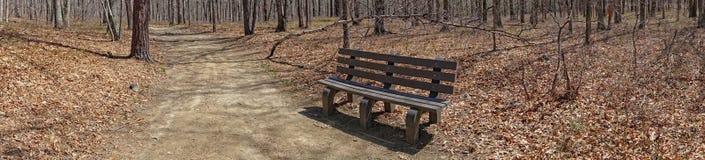 Osamotniona ławka i przegięty drzewo zdjęcia royalty free