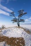 Osamotniona święta drzewa i skały Shamanka Olkhon wyspa w jeziornym Baikal Zdjęcia Royalty Free