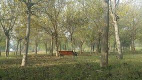 Osamotniona ławka w drewnach Obrazy Royalty Free