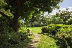Osamotniona ławka w ogródzie botanicznym Drogowy miasteczko, Tortola Fotografia Royalty Free