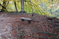 Osamotniona ławka w Plitvice Fotografia Stock