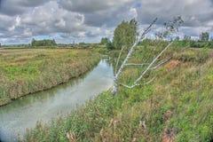 Osamotniona brzoza blisko rzeki obraz stock