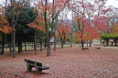 Osamotniona drewniana ławka w Japońskim jesień ogródzie Fotografia Stock