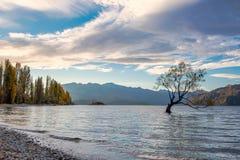 Osamotniona drzewna jesień w Wanaka jeziorze, Nowy Zealand zdjęcie royalty free