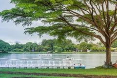 Osamotniona gigantyczna drzewna pozycja na zielonej trawie obrazy stock