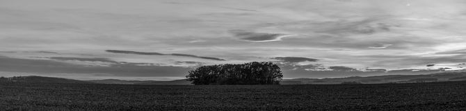 Osamotniona grupa drzewa w polu Obraz Stock