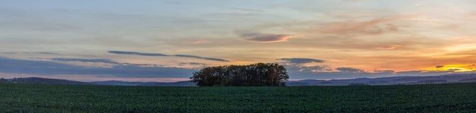 Osamotniona grupa drzewa w polu Obrazy Royalty Free
