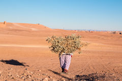 Osamotniona kobieta niesie ładunek drewno w pustynnym Maroko 11 2017 Styczeń Zdjęcie Stock