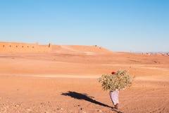 Osamotniona kobieta niesie ładunek drewno w pustynnym Maroko 11 2017 Styczeń Obraz Royalty Free