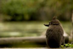 osamotniona małpa zdjęcie stock