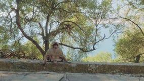 Osamotniona małpa siedzi na krawędzi droga na skale Gibraltar na tle Gibraltar zatoka zbiory wideo