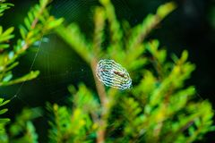 Osamotniona pająk sieć Obraz Royalty Free