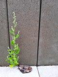 Osamotniona roślina przed ścianą obrazy royalty free
