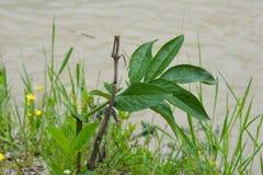 Osamotniona roślina przy wybrzeżem Zdjęcia Royalty Free
