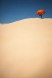 Osamotniona roślina na pustyni Obrazy Royalty Free