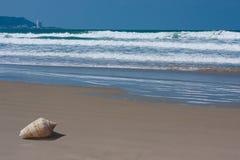 Osamotniona skorupa na plaży z fala obraz stock