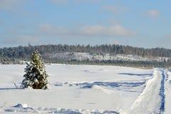Osamotniona sosna w śnieżnym polu odchodowy zdjęcia royalty free