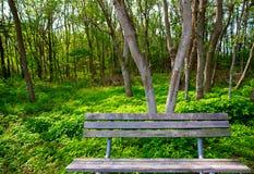 Osamotniona wietrzejąca ławka przy dżungla lasu parkiem Fotografia Royalty Free
