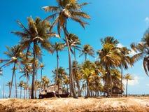 Osamotniona wyspa, mała tropikalna drzewko palmowe wyspa - podróżuje destina Obrazy Stock