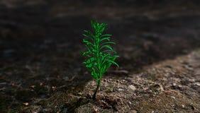 Osamotniona zielona roślina obrazy royalty free