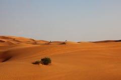 osamotnione pustynne diuny Obrazy Stock