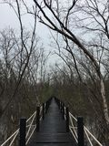 osamotnionego Czuciowego odludnego bladego przejścia lasowy namorzynowy las Zdjęcie Royalty Free
