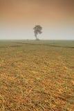 Osamotnionego drzewa i cebuli pola w zimie pod słońcem przy północą Obraz Stock