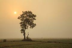 Osamotnionego drzewa i cebuli pola w zimie pod słońcem przy północą Fotografia Stock