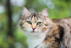 osamotnionego przybłąkanego kota tortoiseshell tricolor kolor siedzi na ganeczku drewniany dom Obrazy Royalty Free