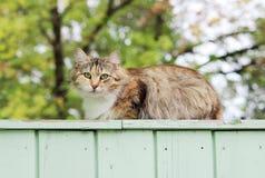 osamotnionego przybłąkanego kota tortoiseshell tricolor kolor siedzi na ganeczku drewniany dom Obraz Stock