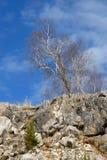 osamotnionego skłonu kamienisty drzewo fotografia royalty free