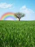 osamotniony łąkowy drzewo Zdjęcia Royalty Free