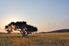 osamotniony łąkowy drzewo zdjęcia stock