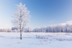 Osamotniony śnieżysty drzewo fotografia stock