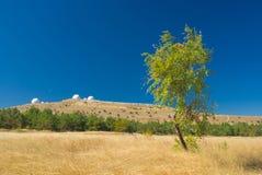 osamotniony brzoza jesienny krajobraz Zdjęcie Royalty Free