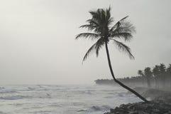 Osamotniony cocnut drzewko palmowe Fotografia Stock