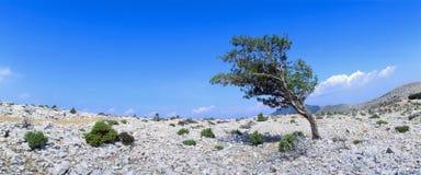 osamotniony Croatia drzewo Zdjęcia Stock