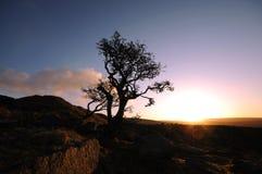 osamotniony cumuje drzewa Fotografia Stock