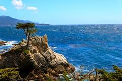 Osamotniony cyprys, Carmen i Monterey, Kalifornia, Usa fotografia stock