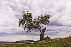 Osamotniony drewno na górze góry, palącej z błyskawicą fotografia royalty free