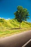 osamotniony drogowy drzewo Obrazy Stock