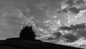 osamotniony drzewa i zmierzchu niebo zdjęcia stock