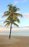 osamotniony drzewko palmowe Obrazy Stock