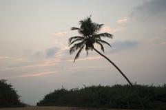 Osamotniony drzewko palmowe na sposobie plaża zdjęcia royalty free