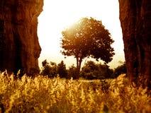 Osamotniony drzewny środek skały i rozjarzona czerwona natal trawa jako pierwszy plan Zdjęcie Royalty Free